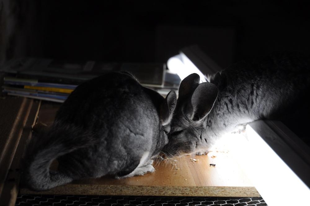 Medo und Dumbo